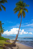 Young girl hugging a palm tree. Young girl scrambling on the high palm tree. Tropical landscape, caribbean view Stock Images