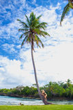 Young girl hugging a palm tree. Young girl scrambling on the high palm tree. Tropical landscape, caribbean view Stock Photo
