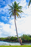 Young girl hugging a palm tree. Young girl scrambling on the high palm tree. Tropical landscape, caribbean view Royalty Free Stock Photography