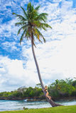 Young girl hugging a palm tree. Young girl scrambling on the high palm tree. Tropical landscape, caribbean view Stock Photography