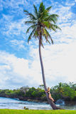 Young girl hugging a palm tree. Young girl scrambling on the high palm tree. Tropical landscape, caribbean view Royalty Free Stock Images