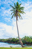 Young girl hugging a palm tree. Young girl scrambling on the high palm tree. Tropical landscape, caribbean view Stock Photos