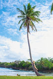 Young girl hugging a palm tree. Young girl scrambling on the high palm tree. Tropical landscape, caribbean view Royalty Free Stock Image