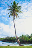 Young girl hugging a palm tree. Young girl scrambling on the high palm tree. Tropical landscape, caribbean view Stock Image