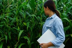 A young girl inspects the corn and notes the observations found stock image