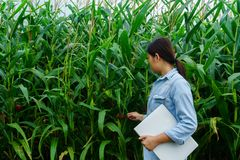 A young girl inspects the corn and notes the observations found royalty free stock photo