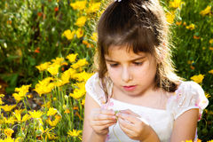 Young Girl Investigates Flower. A young girl sits in a bed of wild African Daisies and pulls apart the inside of a flower with a curious look on her face. She is Royalty Free Stock Image