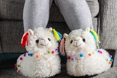 Free Young Girl Is Wearing Cute Soft 3d Llama Slippers Stock Photography - 138492122