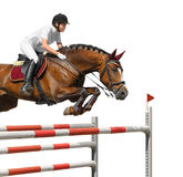 Young girl jumping with bay horse Royalty Free Stock Photo