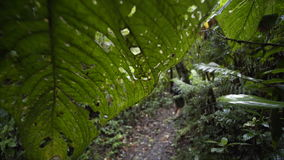 Young girl in jungle. Young girl with backpack walking on trail through rain forest, shot through big leaf with holes, national park Monteverde, Costa Rica stock footage