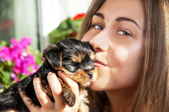Young girl kiss cute puppy Stock Photos