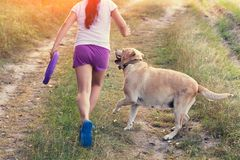 Young girl with dog walking on the field royalty free stock photography
