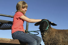 Young Girl and Lamb. A young girl interacts with her 4-H project lamb Stock Photo