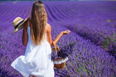 Young girl in the lavander fields Stock Images
