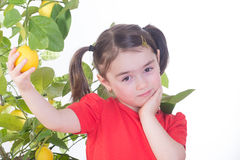 Young Girl with Lemon Tree. Young girl picking a lemon from a lemon tree stock images