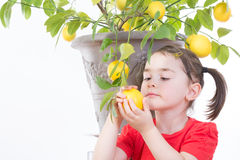 Young Girl with Lemon Tree. Young girl picking a lemon from a lemon tree royalty free stock photo