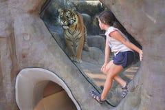 Young girl looking at Bengal Tiger royalty free stock image