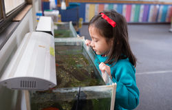 Young Girl Looking for Fish in Fish Tank. Royalty Free Stock Images