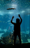 Young girl looks at the fish with her hands up in the Lisbon aqu Royalty Free Stock Image