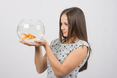 A young girl looks at a goldfish Royalty Free Stock Image
