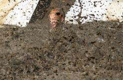 Young girl  makes a big muddy splash Royalty Free Stock Photo