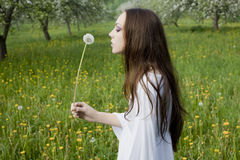 Young girl in a meadow with dandelion Stock Images
