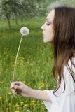 Young girl in a meadow with dandelion in the hands Royalty Free Stock Image