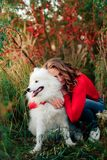 Young girl in a nature park hugging a white dog Samoyed Laika at sunset Stock Photo
