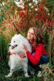 Young girl in a nature park hugging a white dog Samoyed Laika at sunset Stock Photos