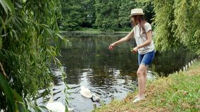Young girl in panama feeds swans on the lake in the summer park. Green grass and clean water in pond stock video
