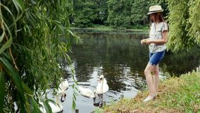 Young girl in panama feeds swans on the lake in the summer park. Green grass and clean water in pond stock footage