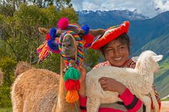Young Girl, Peru People, Travel. A young girl in Peru smiles while holding a llama and a lamb. The beautiful and pretty Peruvian young woman wears traditional royalty free stock photos