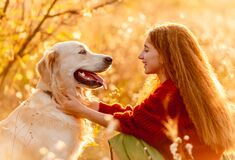 Free Young Girl Petting Dog In Nature Stock Photography - 198715252