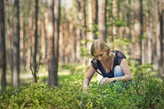 Young girl picking berries Stock Photography