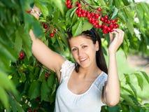 Young girl picking cherries. Beautiful young girl picking cherries Stock Photo