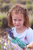 Young girl picking lavender. Girl with a bunch of lavender flowers Stock Photos