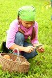 Young girl picking mushrooms Royalty Free Stock Photo