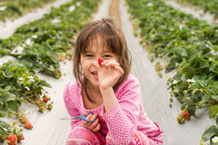 Young Girl Picking  Strawberry Royalty Free Stock Photos