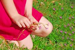 Young girl picking wildflowers Stock Photography