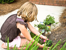 Young Girl Planting Flowers Stock Photo