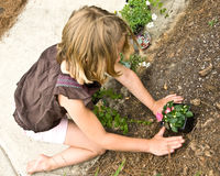 Young Girl Planting Flowers. A young girl at the front of a house planting a flower along the walkway stock photos