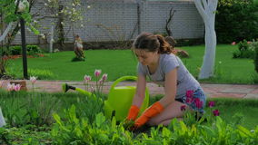 Young girl planting flowers in the garden stock video footage