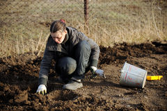 A young girl is planting potatoes. On her plot of land in a village in early spring royalty free stock images