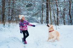 Young girl playing with golden retriever on winter walk. royalty free stock images