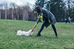 Young girl playing with her dog on grass Royalty Free Stock Photography