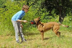 Young Girl Playing With Her Pet Belgian Shepherd. Dog Playing With Owner. Young Girl Playing With Her Pet Belgian Shepherd. Dog And Owner, Outdoor. Belgian Stock Photography