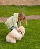 Young girl playing with little dog  Stock Photos