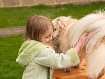 Young girl playing with a little dog Royalty Free Stock Image