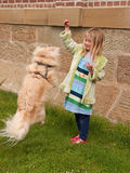 Young girl playing with little dog who is jumping. Young girl playing with a little dog who is jumping into the air Royalty Free Stock Images