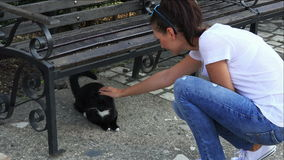 Young girl playing with a stray cat in the park stock video